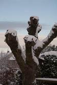 Snow, Delves Wood -001