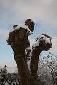 Snow, Delves Wood -004
