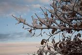 Snow, Delves Wood -006