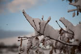 Snow, Delves Wood -010