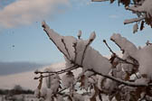 Snow, Delves Wood -011
