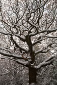 Snow, Delves Wood -014