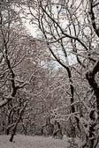 Snow, Delves Wood -015