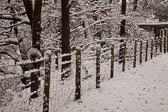 Snow, Delves Wood -018