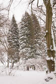 Snow, March 2013 -008