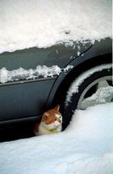 Car,_Cat,_Snow_006.jpg