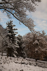 Snow,_Beaumont_Park_-101.jpg