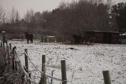 Snow,_Crosland_Hill_-002.jpg