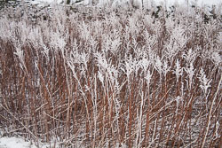 Snow,_Crosland_Hill_-007.jpg