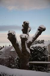 Snow,_Delves_Wood_-002.jpg