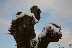 Snow,_Delves_Wood_-003.jpg