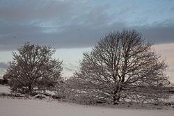 Snow,_Delves_Wood_-005.jpg