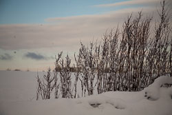 Snow,_Delves_Wood_-009.jpg
