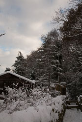 Snow,_Delves_Wood_-013.jpg