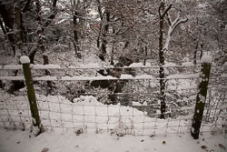 Snow,_Delves_Wood_-016.jpg