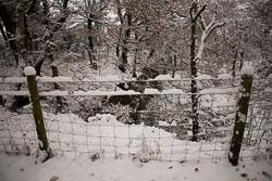 Snow,_Delves_Wood_-016.jpg