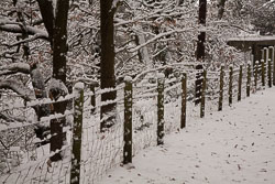 Snow,_Delves_Wood_-018.jpg