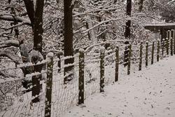 Snow,_Delves_Wood_-018.jpg
