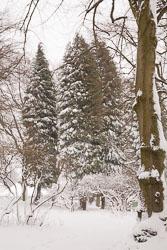 Snow,_March_2013_-008.jpg