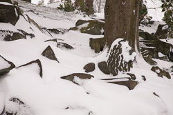 Snow,_March_2013_-026.jpg