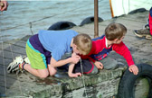 Crab_Fishing,_Felixstowe_-011.jpg