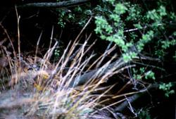 Scammonden_1990_-004.jpg