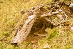 Fossil_Hnuting,_K_2003,_023.jpg