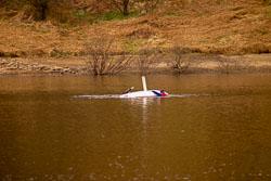 Sailing,_Sc_2003,_044.jpg