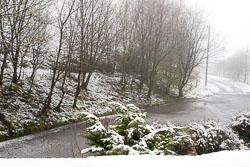 Snow,_Sc_2005,_001.jpg