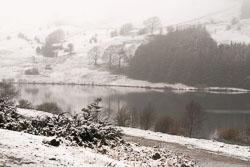 Snow,_Sc_2005,_009.jpg