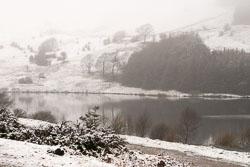 Snow,_Sc_2005,_010.jpg