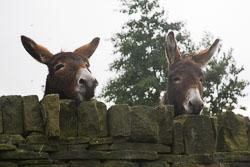 Donkeys-001.jpg