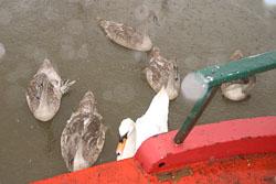 Swan-003.jpg