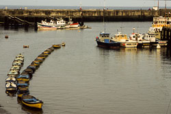 Bridlington_Harbour_-059-1.jpg