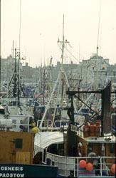 Whitby_Harbour_-001.jpg