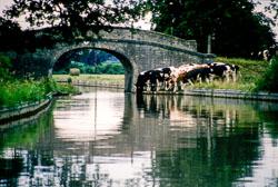 Canal285.jpg
