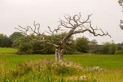 Tree_101.jpg