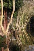 Llangollen_Canal-142