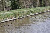 Llangollen_Canal-182