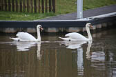 Middlewich_Branch_Shropshire_Union_Canal-038