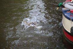 Llangollen,_Llangollen_Canal-119.jpg