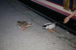 Llangollen,_Llangollen_Canal-135.jpg