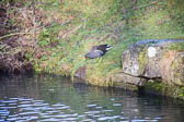 Grand_Union_Canal-922