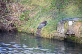 Grand_Union_Canal-923