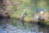 Grand_Union_Canal-924
