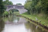 Heron_Shropshire_Union_Canal-001
