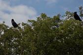 Rooks_Shropshire_Union_Canal-002