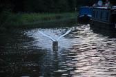 Swan_Shropshire_Union_Canal-031