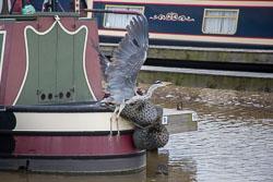 Heron_Aqueduct_Marina_Middlewich_Branch_Shropshire_Union_Canal-001.jpg