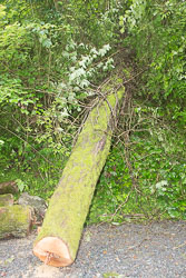 Woodseaves_Cutting_Shropshire_Union_Canal-021.jpg